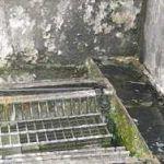 legionella bacteria in drain