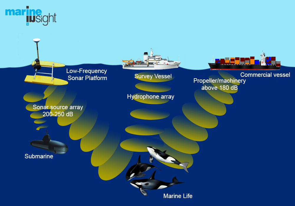 underwater noise effect on animals