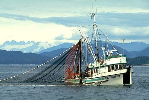 Seiners Types of Fishing Vessels