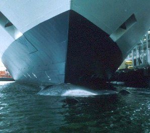 Fin on Bow of Crusie Ship How Shipping Has Become a Great Threat to Whales?