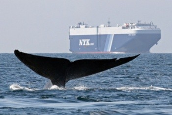 Portland How Shipping Has Become a Great Threat to Whales?