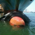 whale on ship's nose