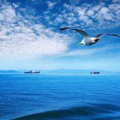 ships gull