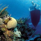 Coral reef and Boat (c) A. Venn /awi.de