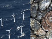 Research Has Begun To Utilize Floating Wind Farms As Vectors For The Spread Of Invasive Species