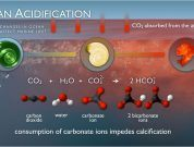 Effects of Ocean Acidification on Marine and Human Life