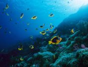 What are Marine Reserves?