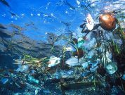 How Is Plastic Ruining The Ocean?