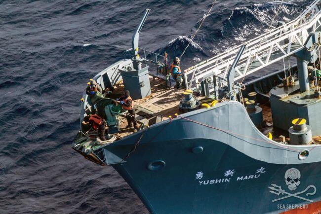 GL-SI-heli-spots-Nisshin-Maru-and-2-harpoon-ships-
