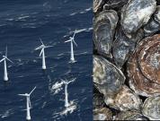 sams_Floating Wind Farms