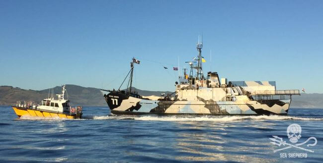 Sea_Steve-Irwin-with-pilot-boat-coming-into-Dunedin-