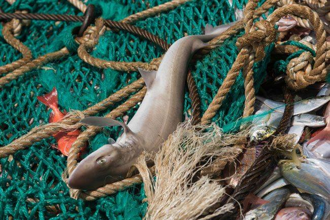 Shark_Fins_Greenpeace