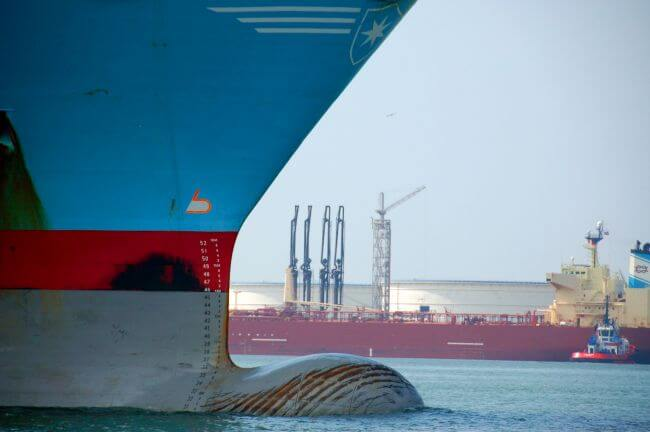 20000_containership