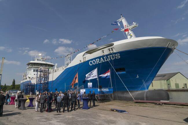 coralius