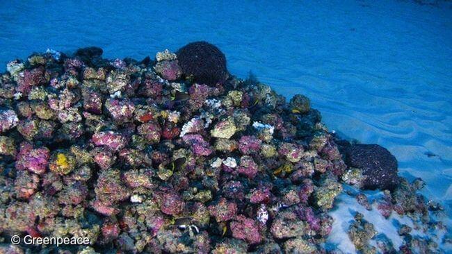Greenpeace_amazon reef