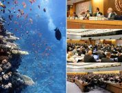 IMO's MEPC To Implement BWM Convention