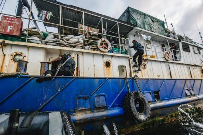 seashepherd_trawler arrest3