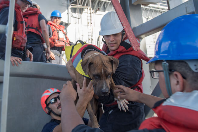 USS Ashland rescues mariners and dogs