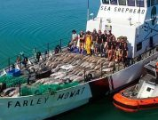 Sea Shepherd Launches Campaign To Save the Vaquita Porpoise in Mexico
