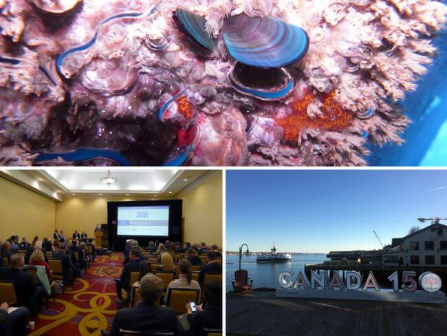 Finding biofouling solutions
