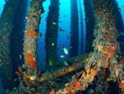 UK P&I Club – How Can Biofouling Be Reduced?