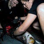 sea shepherd rescues