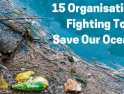 15 Brave Organisations Fighting To Save Our Oceans