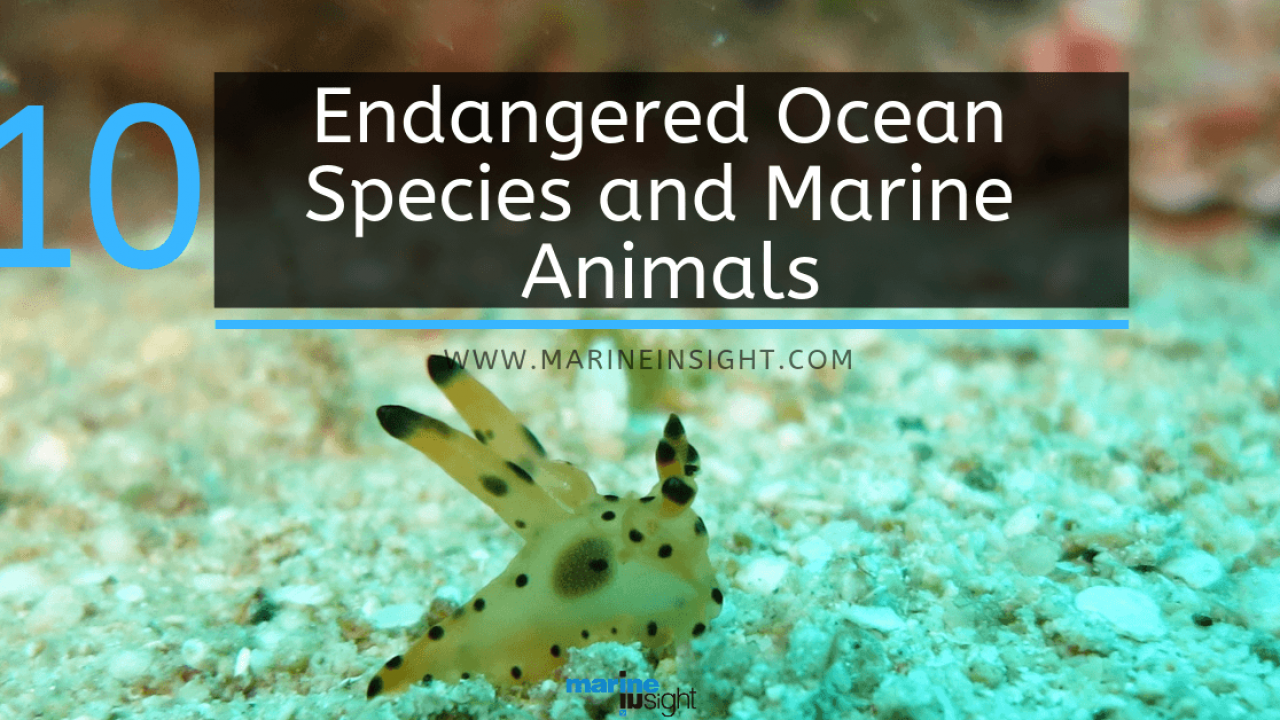 write about the marine life found in indian ocean
