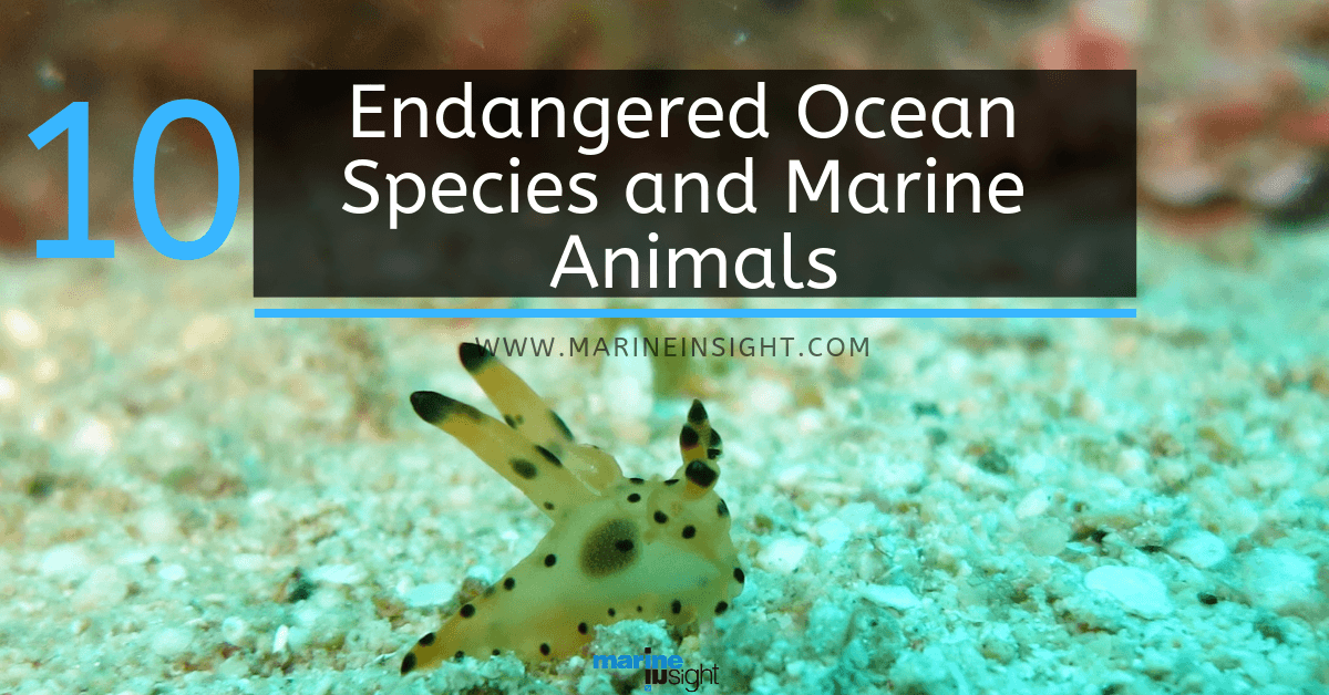 Image of: Plastic Marine Insight 10 Endangered Ocean Species And Marine Animals
