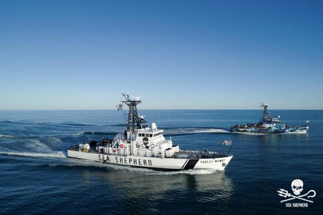 sea shepherd with mexican officers_1