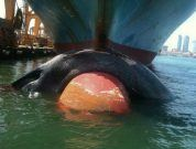 Friend of the Sea Urges the Global Shipping Industry for Immediate Action to Prevent Whales' Ship Strikes and to Implement Sustainable Practices