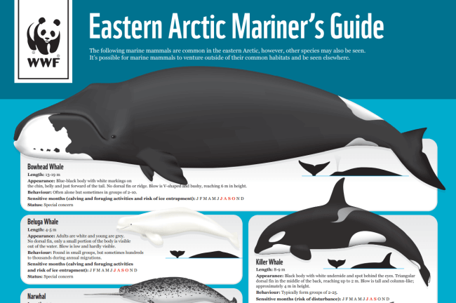 marine mammals guide