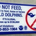 dolphin-sign