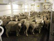 Sheep moratorium part of industry re-set