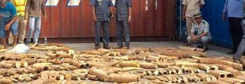3.2 tonnes of Mozambican ivory found in Cambodia