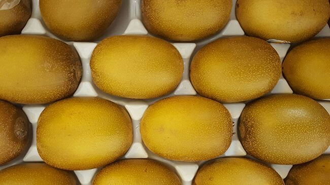 MSC PROVIDES SOLUTIONS TO TRANSPORT GOLD KIWI FROM ITALY TO CHINA