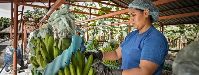APM Terminals helps streamline global fruit company's logistics