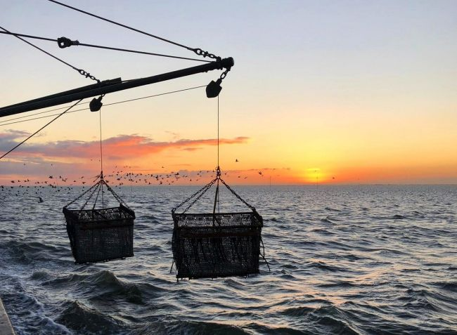 The future of mussel farming