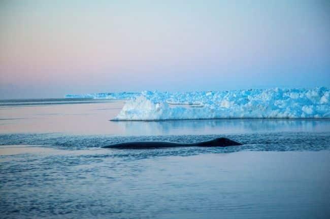 arctic_Representation