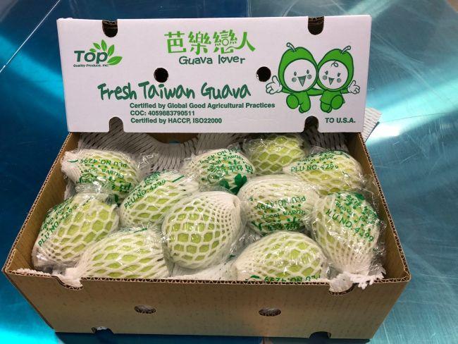 Taiwan-Guava