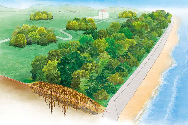 Tsunami Mitigation