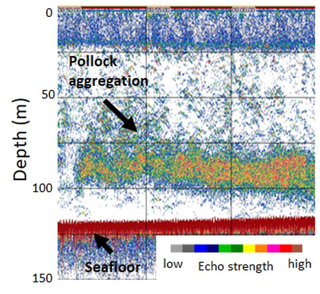 Alaska Pollock aggregation measured from a Saildrone in the eastern Bering Sea. Image credit NOAA Fisheries