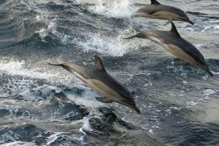 greenpeace dolphins