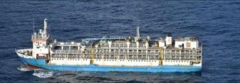 livestock-cargo-ship-news