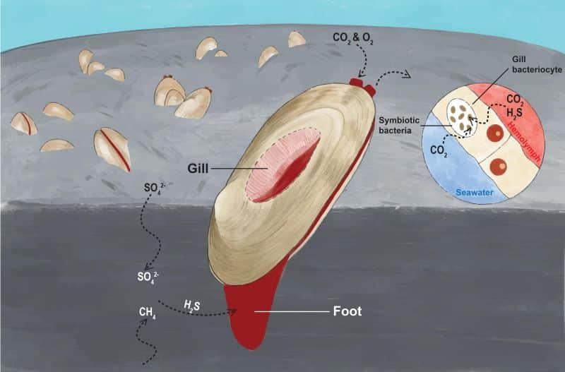 HKBU - - Research Unlocks Genomic Secrets Of Organisms That Thrive In Extreme Deep-Sea Environments