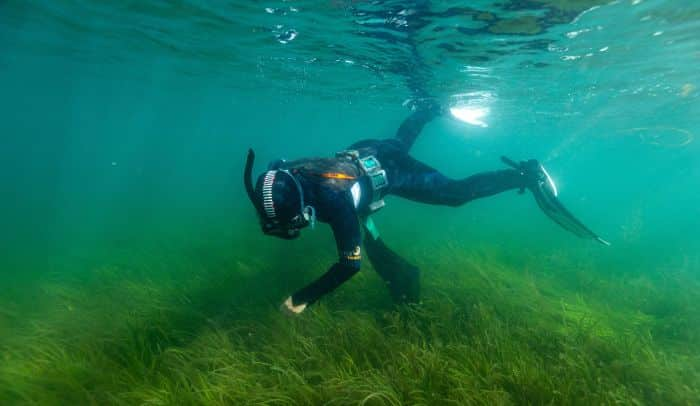 Marine And Climate Experts Call For Ocean Protection In Climate Policy