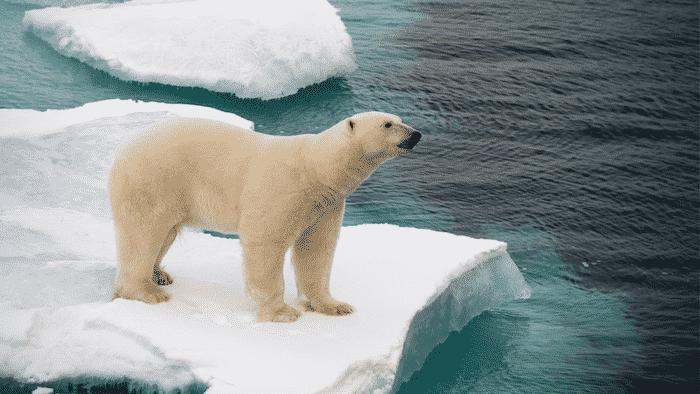 northwest passage animals