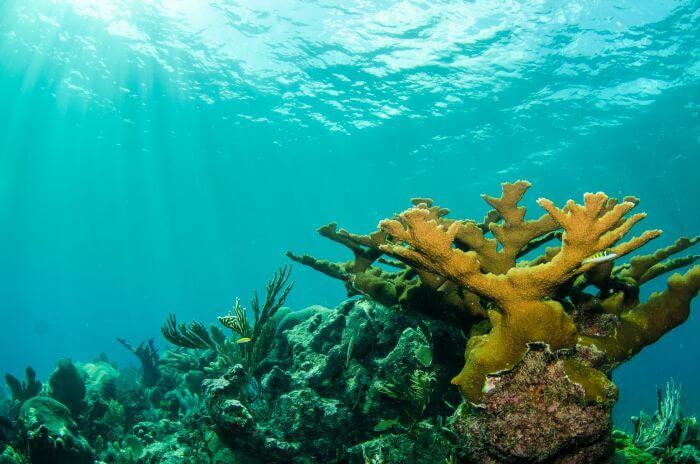 coral reefs at sea