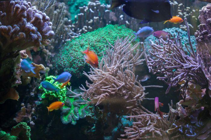 ocean coral reefs