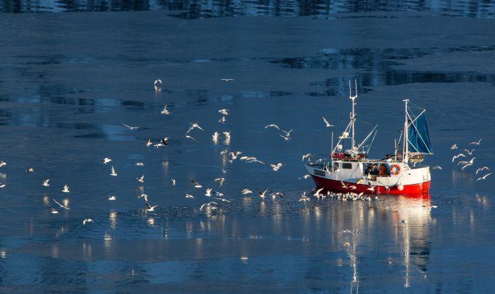 fishing Representation Image